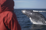 Whale Watching with Elding £45