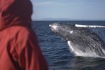 Iceland Whale Watching City Break