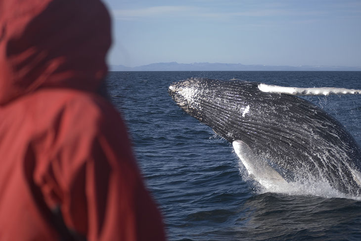 Whale-watching-iceland