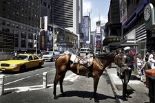 NYPD yellow cab horse
