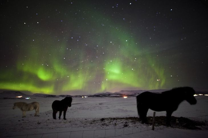 Northern Lights Horses